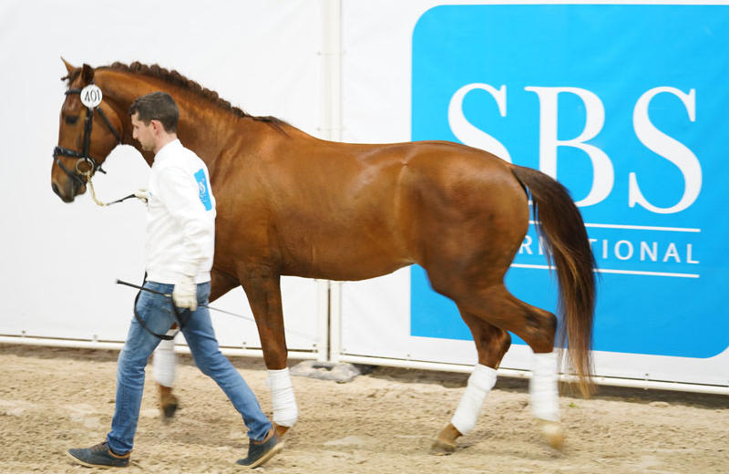 IRON MAN VA (SBS, °2014, Bailamos Biolley/Jazz – dressage)