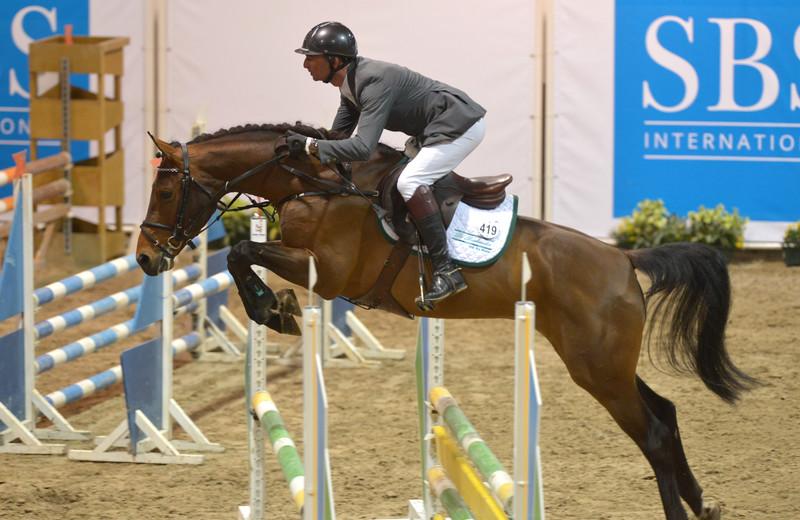 SBS Approved Stallion PIKAP DE MUZE Z (Ponsee V/ Tinka's Boy) (archives)