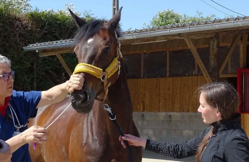 Un Vétérinaire Sentinelle du RESPE se préparant à réaliser un prélèvement nasal (Respe)