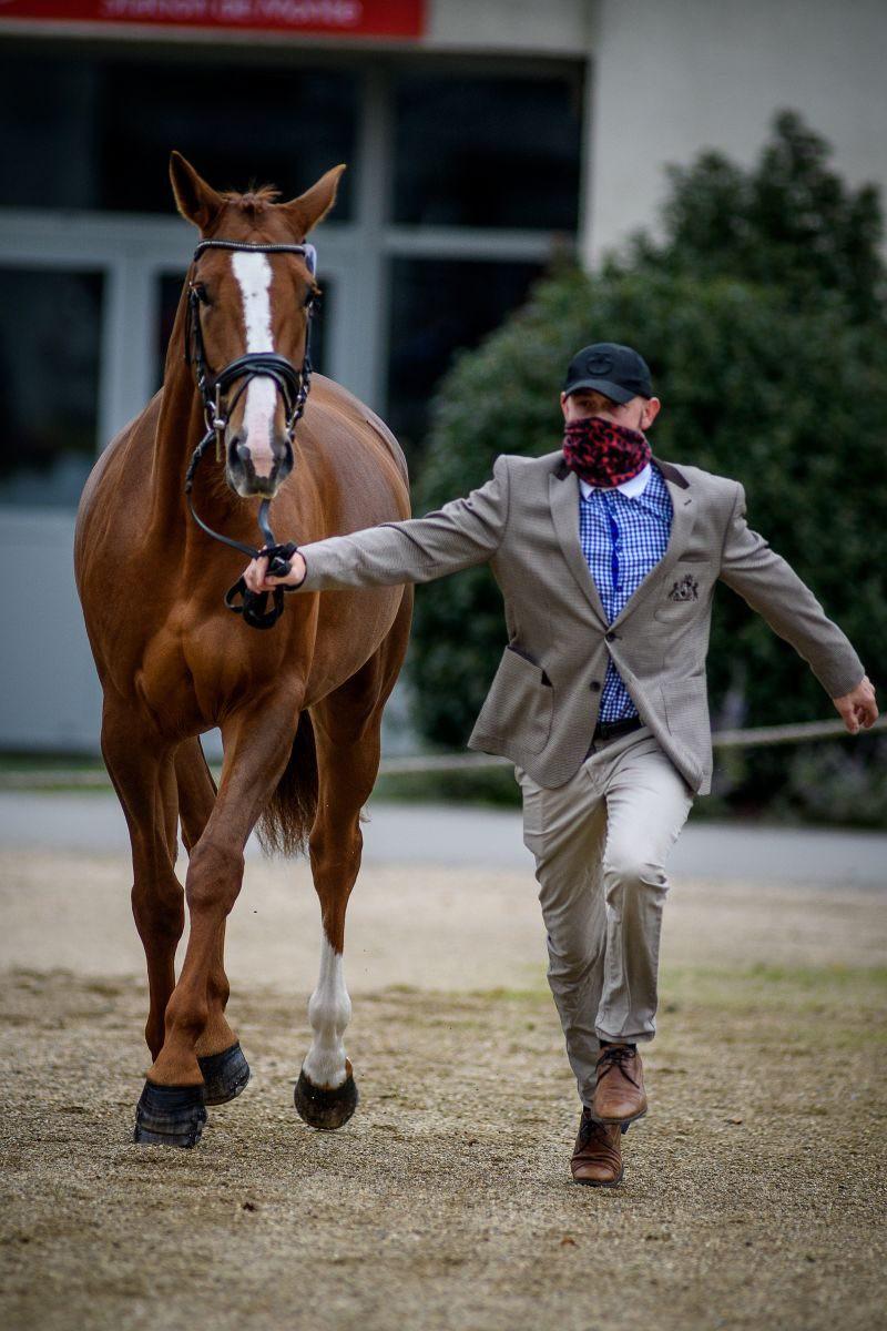 Miroslav Trunda (CZE) and Ideal Coeur de la Licorne. Photo by Tilly Berendt.