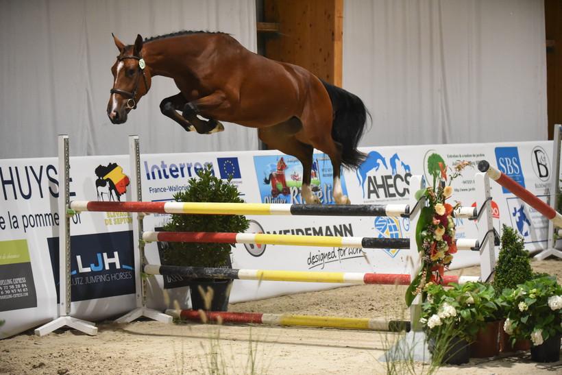 JIOSKO SITTE (Ogano Sitte/Clinton – naisseur: Horse of Belgium à B-7904 Pipaix) (photo (c) Photo Evénement)