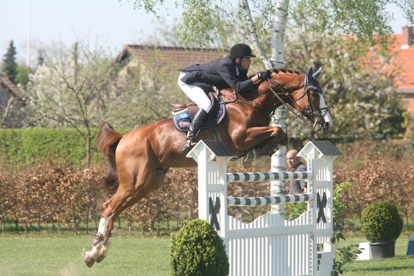OGANO SITTE (Darco/Avontuur - naisseur: Horse of Belgium à B-7904 Pipaix), étalon approuvé à la monte par le SBS (photo archives)